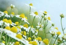 toprağın kızları✿▪✿▪✿(flowers ) / çiçekler