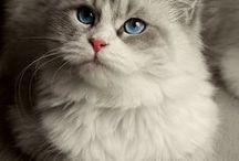 pisicikler (.Cat )