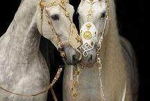 özgür ruh  <3 (Horses) / atlar
