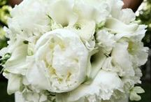 Cloister Wedding / most updated / by Kate McEvoy