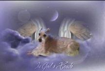 Schnauzers Rule / dedicated to Princess Diana Lynn who went OTRB in 2010.  And to my 4 year old schnauzers, Ziva and Katie. Love my schnauzers REPIN as many as you wish.  NO limits here! / by Delana Brooks