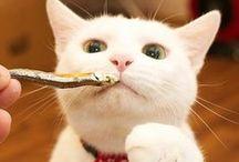 Cat / 飼い猫のミミ♀とメル♀のアルバム