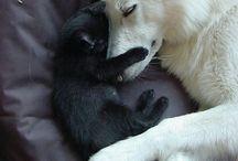 Doge & Kut