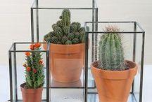 Botanic / De leukste inspiratie voor planten in je interieur. Geen op zich zelf staande elementen meer, maar integreren in je interieur. Zo worden het echt blikvangers!