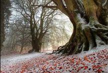 l'autunno incontra l'inverno
