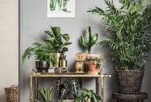 moving in - plants