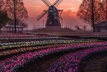 Netherlands Travel / Are you planning a trip to Netherlands? This board will help you to plan your trip. Travel stories, inspiration, practical tips and photography to plan your next trip to the Netherlands.