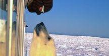 ツ The POLES  [The Whitest Continent] / Artic, Antartic, Siberia, Iceland, North Canada... the White Earth.