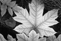 ツ It was shot by ANSEL ADAMS [Photographer] / Impressive landscape photographer. A master of black and white.