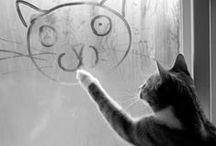 ツ Happy Pets [Photography of Animals]