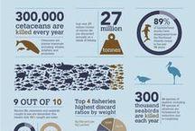 infographic / 인포그래픽 infographic