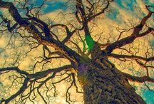 Trees / Have you ever talked with a tree, pressed your ear against its bark and listened?...