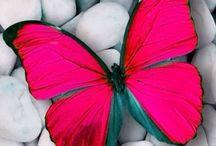 Flutter / ...Renewal, Transformation, Joy, Lightness of Being...