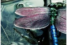 """Flit / """"Dragonflies carry messages that deal with deeper thought - and they ask that we pay attention to our deeper thoughts and desires."""""""