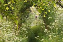 vild have