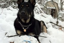 """GSD / """"Some things just fill your heart without trying.""""  ~ Sister Sassy Pants"""