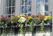 Window boxes / by Susan Pate