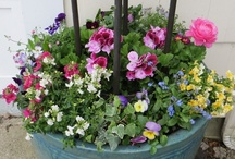 Spring Planters / by Susan Pate