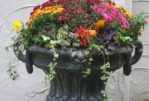 Autumn Planters & Plantings / by Susan Pate