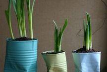 φυτά / βάζα