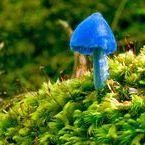Fungos Exóticos
