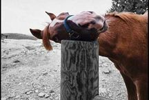 Bianca AWESOME / If you like animals, funny stuff and photography then check this out