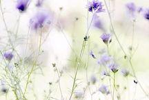 Garden / Garden, outsite, green / by Denise / deniesoverseas