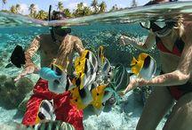 under sea / verry love sea adventure