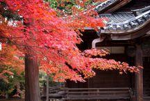 Kyoto / Photos in Kyoto