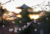 Chubu / Photos of Chubu region (Aichi, Gifu, Mie, Shizuoka, Fukui, Ishikawa, Toyama, Nagano, Yamanashi and Niigata)