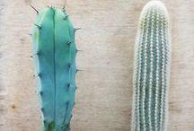 Cacti / Cacti aand suculents