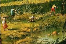 Raccolta delle erbe