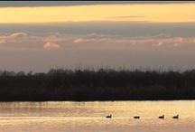 Parco del Delta del Po / Un ambiente dall'eccezionale valore ecologico e naturalistico, tra i più produttivi e ricchi in biodiversità.