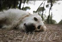 dog's beauty