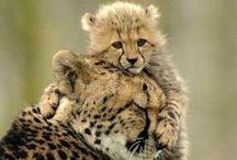 Animals - Wonder of God's Creatures / Animals - Wonder of God's Creatures / by Cajun Fire