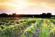 Vineyard Golf / Photos of our greens and golf outings held on the course.  / by Renault Winery
