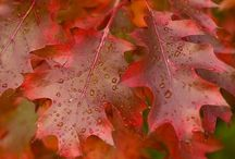 Fall.....in love
