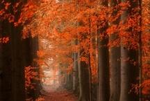 i hug trees / by myrt marshall