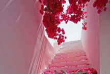Floral with bougainvillea