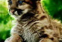 dzikie koty