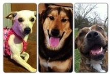 Lost and Found Pets / by KFDM News