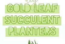 house plants / House plants, home decor using house plants, house plants low light