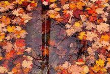 Fabulous Fall :: Picr / Let's celebrate the colors of the fall season!
