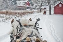 Horses / by Beth Watson