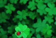 Buona Fortuna-Good Luck
