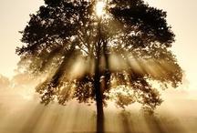 ...per fare il legno ci vuole l' albero...