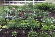 Great Vegetable Garden Ideas / Loving creative, easy to navigate gardens.