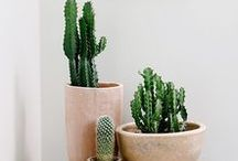 Plant decorating / Beauty of decorating with plants