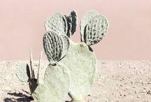 Cactus & desert