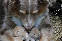 only the cutest animals / by Jillian Christopher